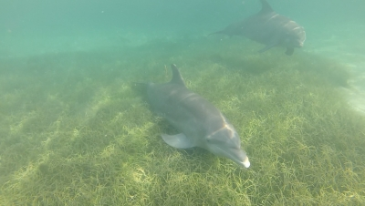 Our Dolphin Encounter and Swim, Fiesta Night, and, of course, more data collected!